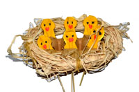 6-little-chicks-fi